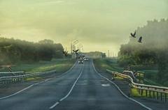 Cold morning on the road (v o y a g e u r) Tags: road route way birds oiseaux asphalt morning cars fog moving