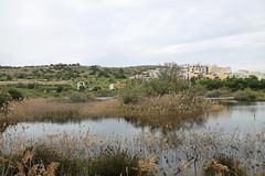 Simar Reserve (Roy Lowry) Tags: simar malta birdlifemalta