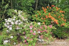 Fellows Riverside Gardens (84) (Framemaker 2014) Tags: fellows riverside gardens mill creek park youngstown ohio northeast united states america