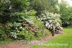 Fellows Riverside Gardens (83) (Framemaker 2014) Tags: fellows riverside gardens mill creek park youngstown ohio northeast united states america