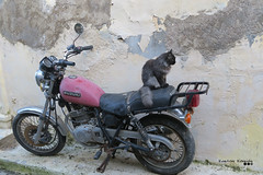 Easy rider, wrong direction... (Κώστας Καϊσίδης) Tags: easyrider rider motorcycle suzuki wall street sidewalk plaka athens greece hellas cat ride kostaskaisidis canon ngc old anafiotika