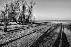 Shadows... (radimersky) Tags: polska poland jezior jezioro turawskie turawa lake day dzień autumn fall landscape krajobraz black white bw monochrome art woda water silesia śląsk sky niebo czarnobiałe 3840x2560 4k opolskie jesień szczedrzyk compactcamera sony cybershot dschx90 drzewa trees beach sand plaża piasek long długie cienie shadows shadow lines