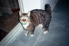 (Just A Stray Cat) Tags: 35mm 35 mm film analog analogue stylus epic mjuii mju ii cat cats kitty kittens gato feline stray kodak ultramax 400