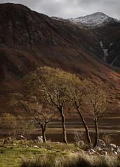 Afternoon light, Glen Etive (S.R.Murphy) Tags: glenetive highlands landscape lochetive oct2019 scotland tree trees afternoon mountain fujifilmxt2