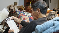 Larry reads the sports page (Judecat (Tis the Season!)) Tags: cat feline longhaireddilutedtortiseshell dog labradorretriever silverlabradorretriever pearl husband love newspaper larry