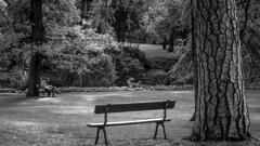 Entre Los Árboles (Lea Ruiz Donoso) Tags: street calles people gente couple asiento bench capricho park arboles trees blancoynegro blackandwhite bw monochrome 2019 nikon