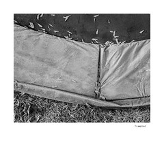 Trampled (agianelo) Tags: grass lawn seed fabric trampoline canvas texture abstract monochrome bw bn blackandwhite
