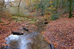 Woodland Stream... (Adam Swaine) Tags: streams waterside water woodland woodlandfloor trees tree autumn autumncolours autumnviews leaves seasons england english uk ukcounties hants walks britain british naturelovers nature nationaltrust adamswaine 2019