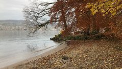 November am Zürichsee (doro 51) Tags: november autumn lake zurich herbst ch zürichsee 2019 dorophoto