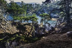 North Shore Trail, Point Lobos, Carmel, California (amy buxton) Tags: california environments water pacificocean pointlobos landscape fall ocean monterey amybuxton northshoretrail seascape pines