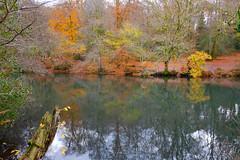 Waggoners Wells Hants (Adam Swaine) Tags: autumn autumncolours autumnviews waterside lakes trees seasons uk ukcounties hants england english leaves beautiful rural naturelovers nature nationaltrust woodland water reflections