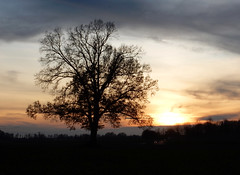 Herbstsonne (Reinhard Zimmer) Tags: badfüssing sunset niederbayern outdoor