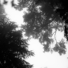Forest In Fog 016 (noahbw) Tags: d5000 ecolastatepark nikon oregon pnw pacificnorthwest abstract blackwhite blackandwhite bw fog foggy forest leaves mist misty monochrome natural noahbw quiet sky spring square still stillness trees woods