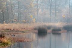 Autumn mood (Pieter ( PPoot )) Tags: autumn mood light color herfst sfeer kleuren ven