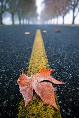 Changing of the Seasons (PNW-Photography) Tags: fall autumn season seasons foggy fog weather leaves leaf tree landscape road stripe richland washington easternwashington tricities