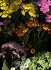 60005.01 Tanacetum parthenium 'Plenum',  Phlox paniculata, Helenium, Hydrangea paniculata 'Grandiflora', Chelone lyonii (horticultural art) Tags: horticulturalart tanacetumpartheniumplenum tanacetum tanacetumparthenium feverfew phloxpaniculata phlox helenium helensflower hydrangeapaniculatagrandiflora hydrangea chelonelyonii chelone pinkturtlehead turtlehead flowers bouquet