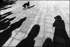 F_MG_9066-Canon 6D2-Canon 16-35mm-May Lee 廖藹淳 (May-margy) Tags: bw maymargy 台灣 黑白 動物 狗 人像 街拍 彰化縣 攝影師 地坪 台灣攝影師 天馬行空鏡頭的異想世界 線條造型與光影 心象意象與影像 portrait dog animal pavement taiwan photographers 中華民國 pleasedontshootme repofchina 幾何構圖 chunghuacounty streetviewphotography mylensandmyimagination linesformsandlightandshadow canon1635mm humanelement taiwanphotographer humaningeometry maylee廖藹淳 naturalcoincidencethrumylens canon6d2 fmg9066 silhouette 剪影