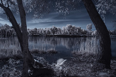 View From The Shoreline At Lindo Lake - Infrared (Bill Gracey 25 Million Views) Tags: view lindolake lakeside infrared infraredphotography convertedinfraredcamera ir composition channelswapping clouds reflections trees nature surreal