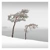 Resilience (Vesa Pihanurmi) Tags: tree pine nature see winter snow minimalism minimalistic finland helsinki vuosaari