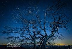 Twinkling Turkey Tree Totemic (Terry Aldhizer) Tags: aldhizer star stars terry terryaldhizercom turkey twinkling saddle overlook blue ridge parkway meadows dan virginia floyd sky tree night taldhizer