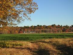 Green fields of barely... (Jane Lazarz Nature Photography) Tags: walkingnewengland janelazarz massachusetts fallinnewengland nikonp900 nikon massachusettsautumn autumn newenglandcountryside westernmassachusetts nikonnature autumninnewengland farm fields green greenfields barley grass