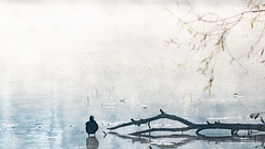 Blässhuhn (Fulica atra) (Role Bigler) Tags: blässhuhn burgäschisee fujifilmxt2 fujinonxf55200rlmois fulicaatra herbst mist natur nebel see wasservogel animal autumn backlight bird burgaeschisee burgäschisee fall fog lake nature schweiz suisse sun svizzera switzerland tier vogel wasser water grasswil kantonbern