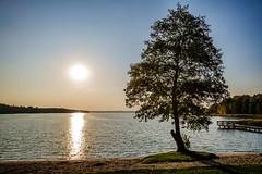 Plaża w Kalu (Tymcio Piotr) Tags: plaża kal węgorzewo drzewo