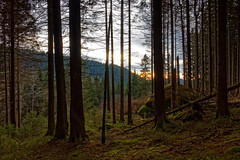 Sunset In The Woods (Adrian Siebert) Tags: wald harz sonnenuntergang