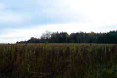 _DSC4255 (sebastianwerba) Tags: werba sebastianwerba 24112019 spziergang oberthambach natur erholung wald wälder baum bäume niederbayern