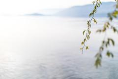 nach bim Wasser (nicolasheinzelmann) Tags: baum see ast blätter lake water blau blue wasser tree dof bielersee herbst fall winter autumn schweiz kantonbern farbe fabig color colour colored canoneos5dmarkiv 5dmkiv 5dmiv canonef50mmf12lusm day dslr switzerland lights light nature 24november2019 november nicolasheinzelmann g