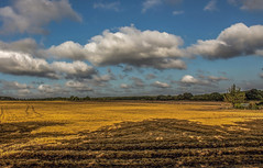 Autumn landscape (fotosforfun2) Tags: autumn seasons colour landscape nature yellow tree sky cloud blue white england britain uk guildford surrey shadow