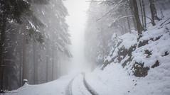Chemin enneigé (Kilian Sanlis) Tags: neige snow winter hiver alsace hautrhin bagenelles wild sauvage motherwood foret wood tree arbre nature