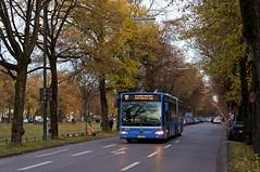 Citaro-Gelenkbus 5410 in der Südlichen Auffahrtsallee kurz vor der Haltestelle Schloss Nymphenburg (Frederik Buchleitner) Tags: 5410 bus citaro gelenkbus linie12 mercedesbenz munich münchen nymphenburg omnibus sev schienenersatzverkehr schlosskanal südlicheauffahrtsallee