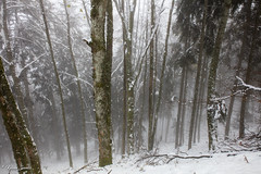 Forêt embrumée (Kilian Sanlis) Tags: neige snow winter hiver alsace hautrhin bagenelles wild sauvage motherwood foret wood tree arbre nature