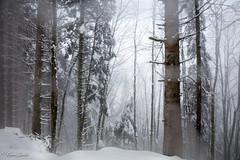 Sublime quiétude (Kilian Sanlis) Tags: nature wild sauvage alsace hautrhin bagenelles neige snow montagne arbre tree