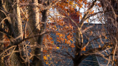 Back Yard Autumn Vibes (John Brighenti) Tags: flickr photography outside backyard digital neighborhood rockville maryland md twinbrook residential suburban town outisde nature autumn fall november cold sunny light daytime telephoto zoom lens gm gmaster sony alpha a7rii ilce7rm2 100400mm sel100400gm trees branches leaves foliage colors orange yellow brown red bokeh