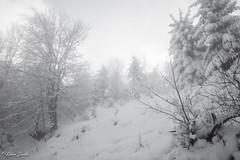 Paysage figé (Kilian Sanlis) Tags: nature wild sauvage alsace hautrhin bagenelles neige snow montagne arbre tree