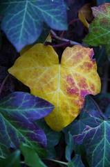 Jesień (Robert Bębenek) Tags: jesień autumn warszawa warsaw park listopad november leaves pentaxlife