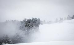 Brume sur les cîmes (Kilian Sanlis) Tags: nature wild sauvage alsace hautrhin bagenelles neige snow montagne arbre tree