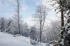 Temps suspendu (Kilian Sanlis) Tags: nature wild sauvage alsace hautrhin bagenelles neige snow montagne arbre tree
