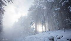 Lueur réconfortante (Kilian Sanlis) Tags: nature wild sauvage alsace hautrhin bagenelles neige snow montagne arbre tree