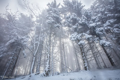 Forêt enneigée (Kilian Sanlis) Tags: nature wild sauvage alsace hautrhin bagenelles neige snow montagne arbre tree