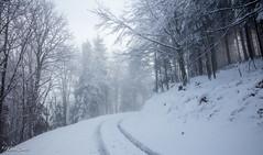 Chemin enneigé (Kilian Sanlis) Tags: nature wild sauvage alsace hautrhin bagenelles neige snow montagne arbre tree