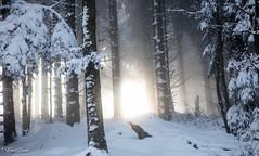 Lueur réconfortante (Kilian Sanlis) Tags: nature wild sauvage alsace hautrhin bagenelles neige snow montagne