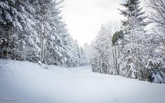 Contrée lointaine (Kilian Sanlis) Tags: nature wild sauvage alsace hautrhin bagenelles neige snow montagne arbre tree