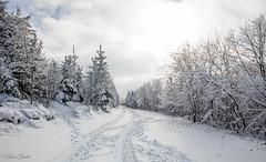 Paysage féérique (Kilian Sanlis) Tags: nature wild sauvage alsace hautrhin bagenelles neige snow montagne arbre tree