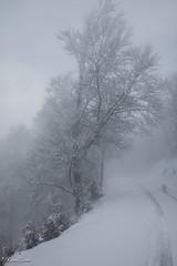 Angoisse ou quiétude ? (Kilian Sanlis) Tags: nature wild sauvage alsace hautrhin bagenelles neige snow montagne arbre tree