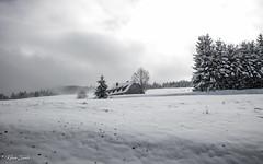 Auberge perdue (Kilian Sanlis) Tags: nature wild sauvage alsace hautrhin bagenelles neige snow montagne arbre tree