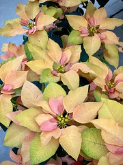 Autumn colors (wjaachau) Tags: decoration autumn garden nature flowers