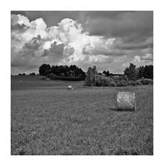 Wspomnienie Lata 2013 (4) (4Rider) Tags: warmia północ north landscape krajobraz pejzaż photoartist drzewo drzewa tree trees las forest poems poetry